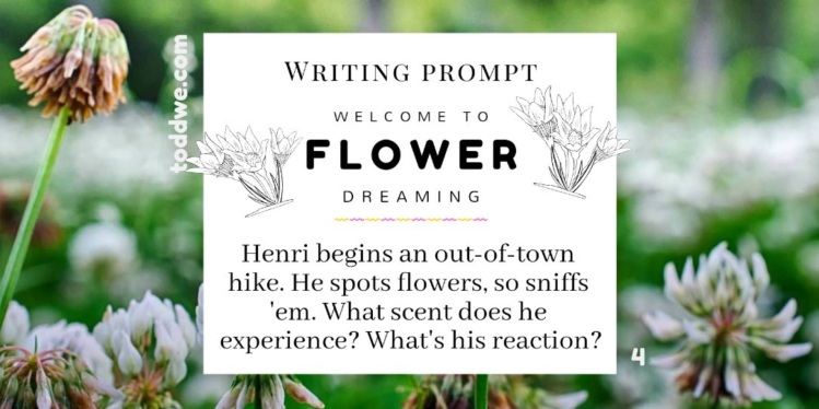 Writing Prompt 4. Welcome to Flower Dreaming. Henri begins an out-of-town hike. He spots flowers, so sniffs 'em. What scent does he experience? What's his reaction?
